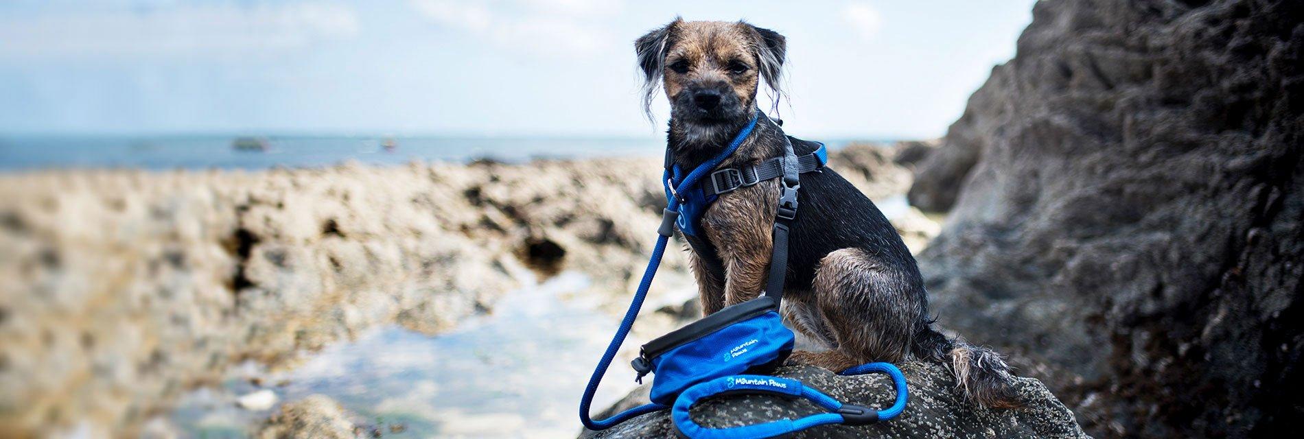 Dog Accessories homepage banner