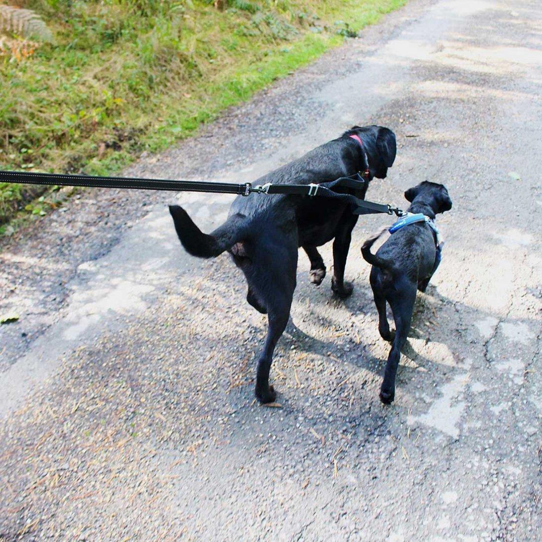 Double Dog Lead