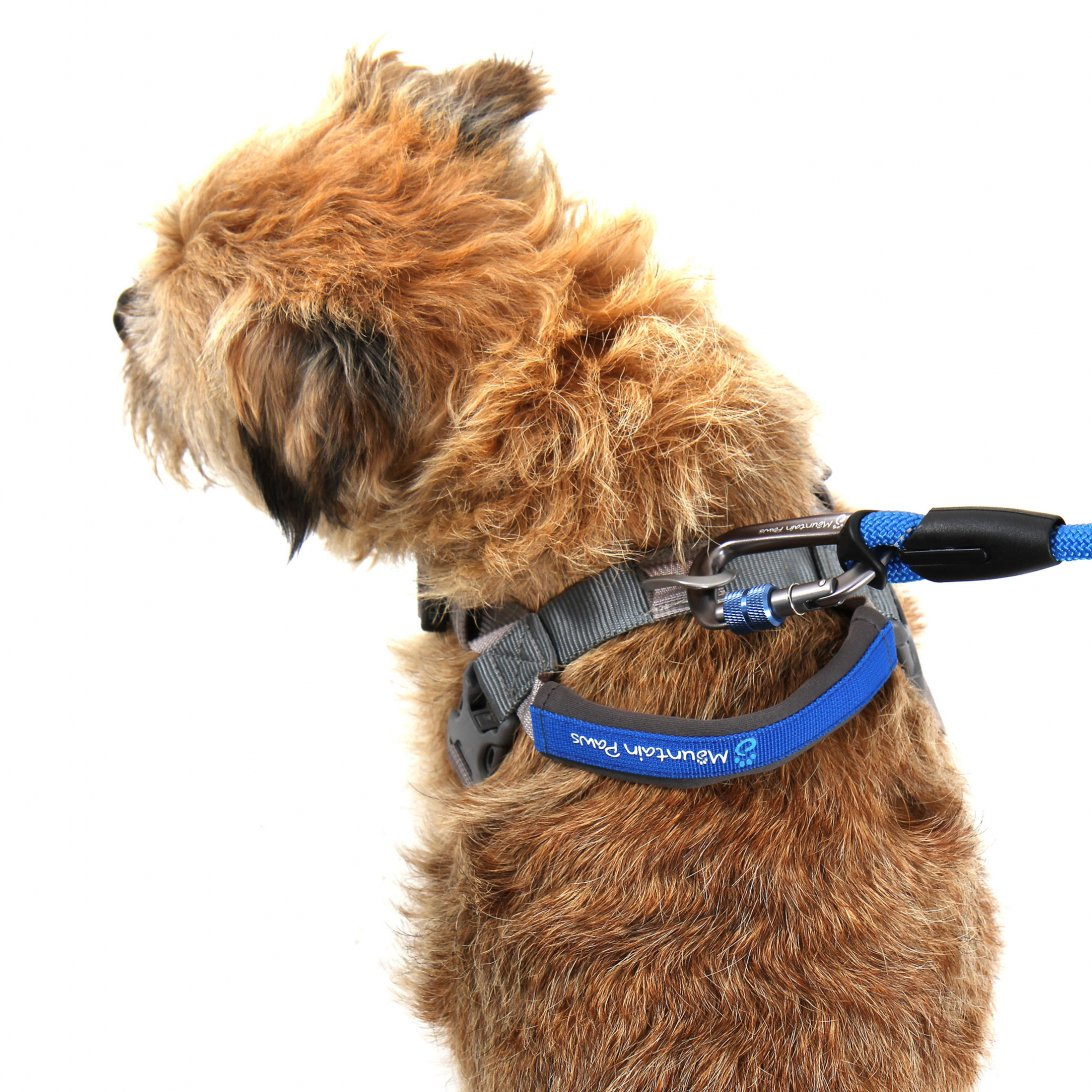 Small blue dog harness