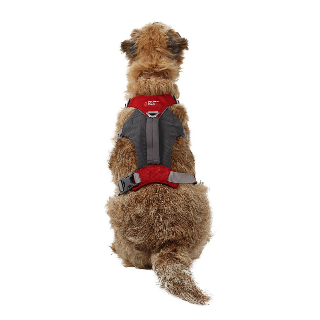 Small red dog hiking harness