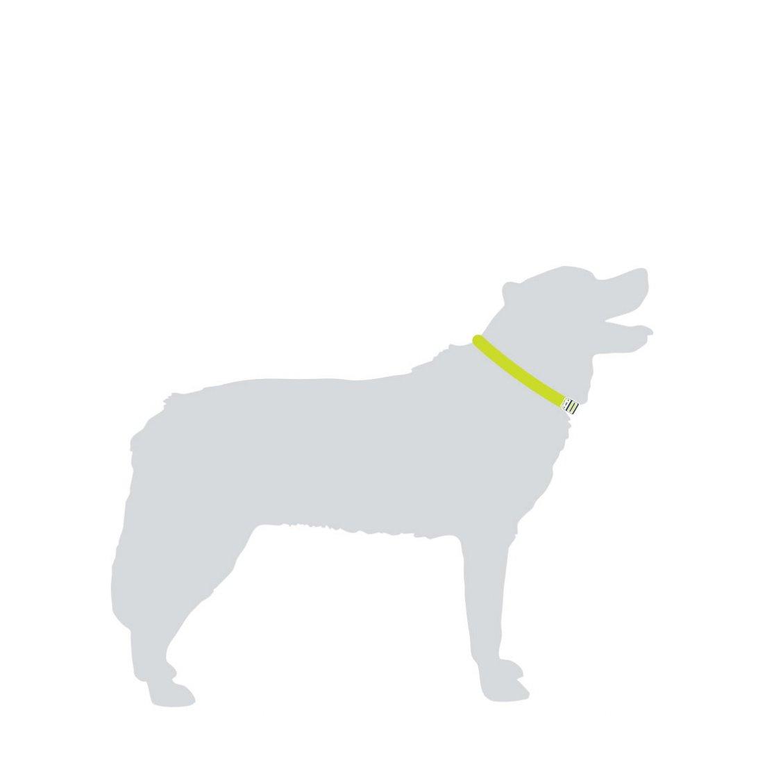 Black Dog Collars