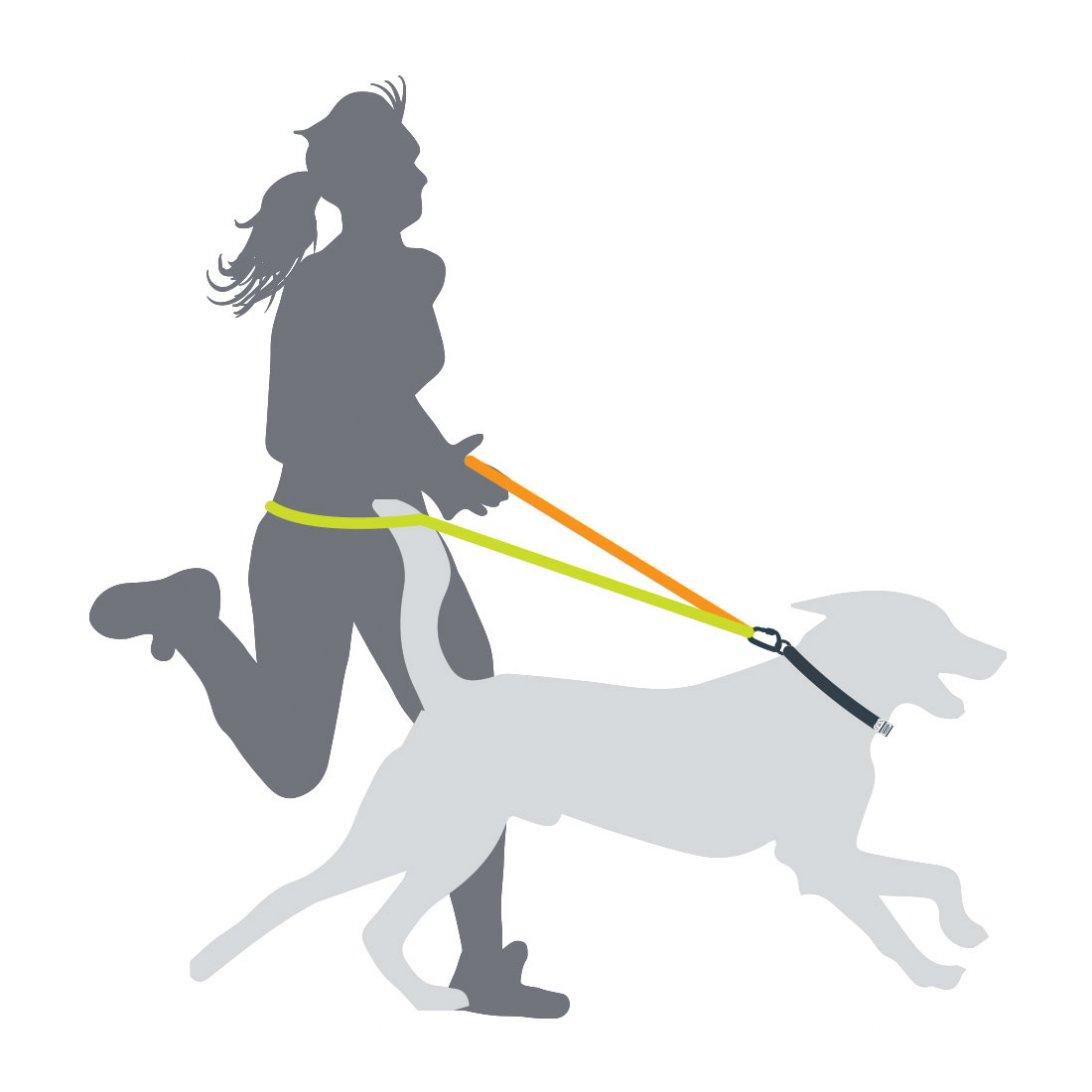 Shock Absorber Dog Lead